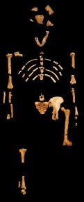 Lucy schelet